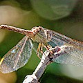 Dragonfly by Susan Rydberg