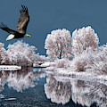 Dream Of An Eagle by Weston Westmoreland
