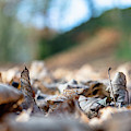 Dried Leaves On The Ground by Scott Lyons