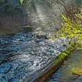 Drift Creek Mist by Matthew Irvin