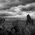 Driftwood Frame by Bill Posner