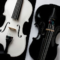 Dual Violins In Black And White  by Garry Gay