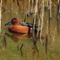 Duck L'orange by Jon Exley