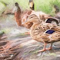 Ducks On Shore Turner by Don Northup