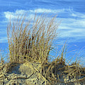 Dune Grass In The Sky by Bill Swartwout Photography