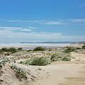 Dunes At Yeagarup Beach, Western Australia by Elaine Teague