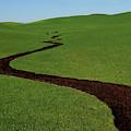 Dunnigan Hills 1 by Robert Woodward