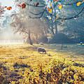 Dutch Ecological Farm by Ariadna De Raadt