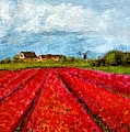 Dutch Tulips Farm by Asha Sudhaker Shenoy