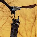 Eagle Flying Off by Steven Santamour