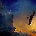 Eagle Over The Top by Gopan G Nair