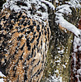 Eagle Owl In The Snow by Arterra Picture Library
