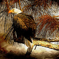Eagle Painterly by Deborah Benoit
