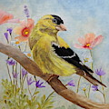 Early Spring American Goldfinch by Angeles M Pomata