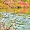 Early Spring Yamhill River by Jerry Sodorff