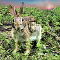 Eastern Cottontail Rabbit by Angelcia Wright