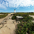 Edgartown Lighthouse Marthas Vineyard by Michelle Constantine