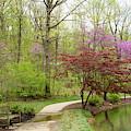 Edith Carrier Arboretum Pathway by Allen Nice-Webb