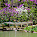 Edith_carrier_arboretum by Allen Nice-Webb