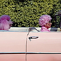 Elderly Woman And Pink Poodle In Pink by Tim Macpherson