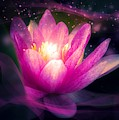 Elegant Lilac Water Lily Lotus Flower On Purple by Design Shack