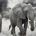 Elephant And Babies by Judith Kitzes