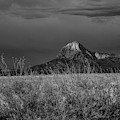 Elephant Head Butte Black And White by Chance Kafka