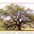 Emancipation Oak Symbol Of Freedom Poster by Ola Allen
