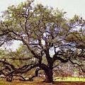 Emancipation Oak by Ola Allen