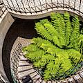 Embarcadero Stairway by Kate Brown