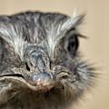 Emu Print 9052 by Paulette Thomas