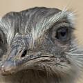 Emu Print 9053 by Paulette Thomas