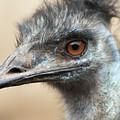 Emu Print 9092 by Paulette Thomas
