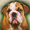 English Bulldog by Robert Kinser