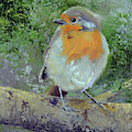 English Robin by Marsha Karle