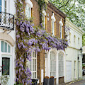 Ennismore Gardens Mews Wisteria by Tim Gainey