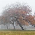 Enveloping Fog by Susan Warren