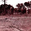 Environmental Destruction by D Hackett