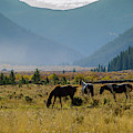 Equine Valley by Jason Bohl