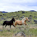 Equines On The Run by Kae Cheatham