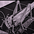 Escher 173 by Rob Hans