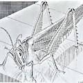 Escher 174 by Rob Hans