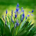 Essense Of Spring by Kristi Swift