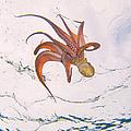 European Octopus by Alex Bramwell