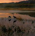 Evening Duet by Susan Warren