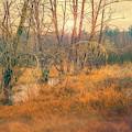 Evening Mist by Jean OKeeffe Macro Abundance Art