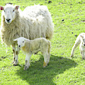 Ewe With Lambs by Victor Lord Denovan