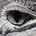 Eye Of Alligator by Katherine Taibl