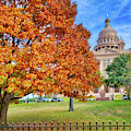 Fall Beauty At The Texas State Capital by Lynn Bauer