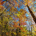 Fall Beauty In Georgia by Keith Smith